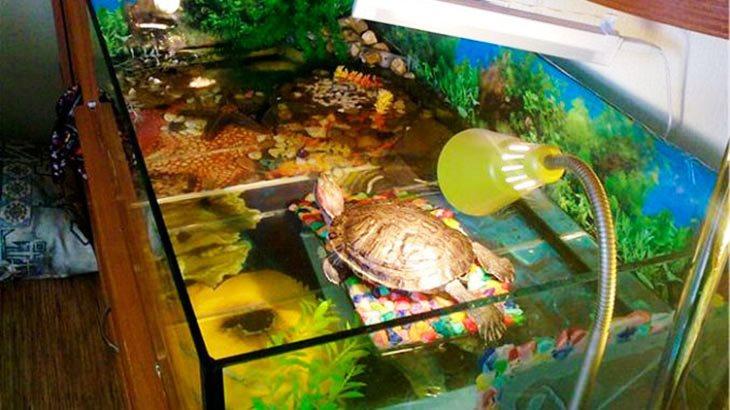 Обогрев черепахи