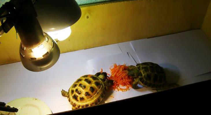 Лампы для черепах