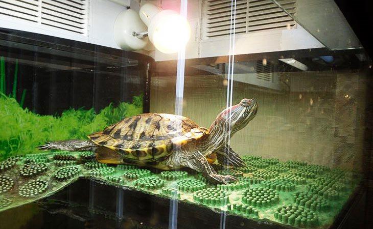 Аквариум черепахи