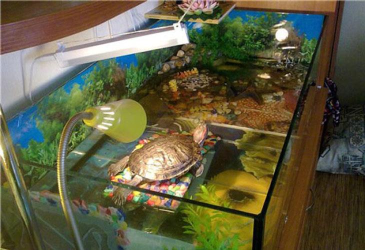 Лампа для черепах