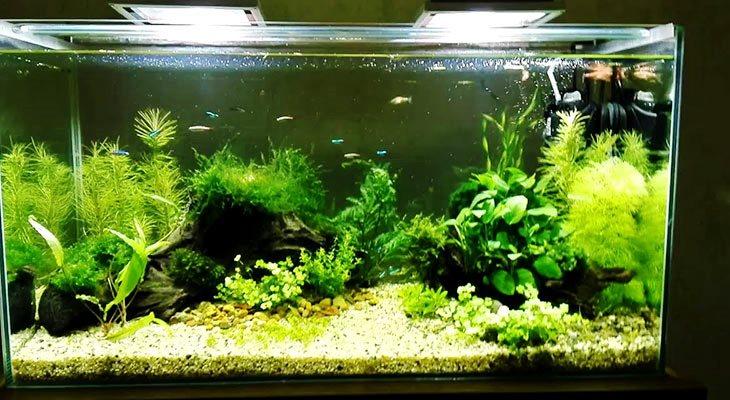 Освещение 100 литрового аквариума
