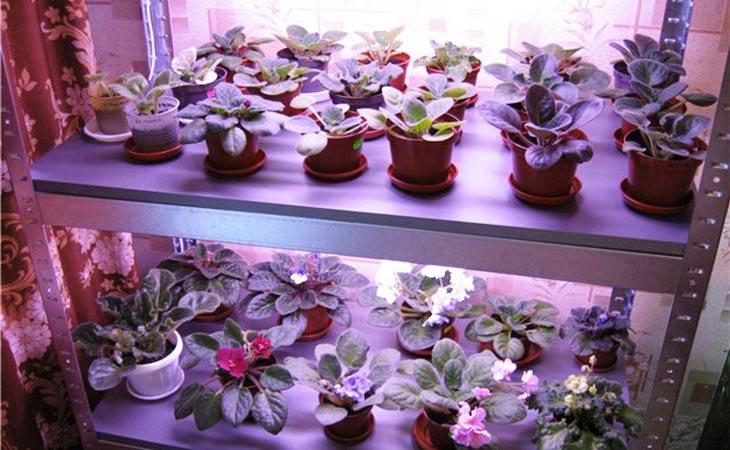 Искуственное освещение растений фитолампами встроенными в стеллаж