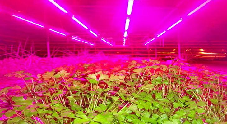 Сельскохозяйственные светильники
